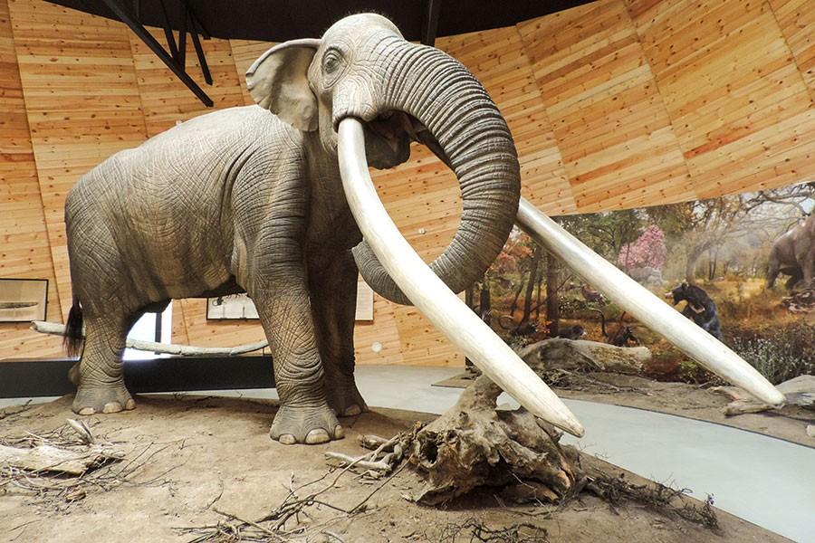 """Палеонтологичен музей """"Плиоценски парк"""" в Дорково"""
